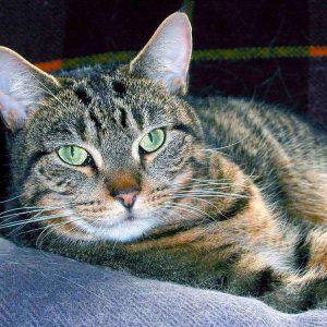gatos-farmaciaanimales