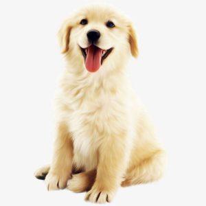 perros-farmaciaanimales